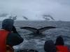 whale_thumb